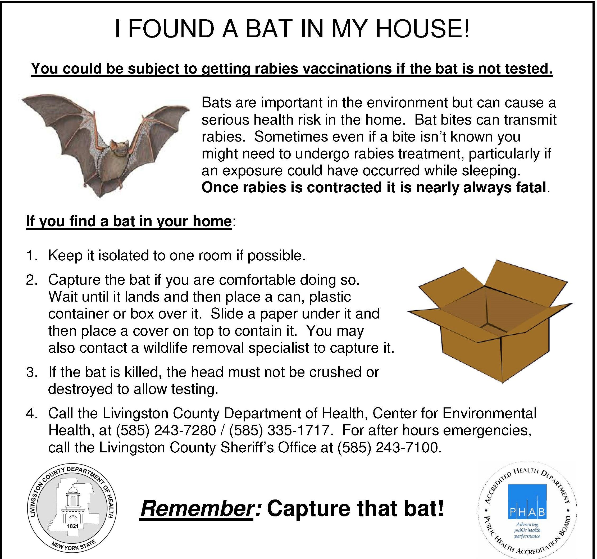A bat ad regarding what to do if you have a bat in your house.